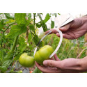 Compas de mesure fruits 2 à 22cm