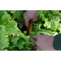Weeding knife with a talon point 6cm