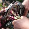 Manual Pick and Bunch tapener Terrateck