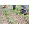 Single-wheel market gardening weeder 180mm
